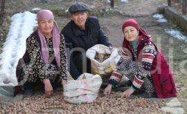 Кыргызстандын жаңгагын Европага экспорттоого болот